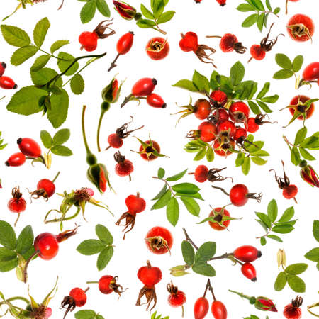Rosehip isolated on white background, seamless pattern  photo