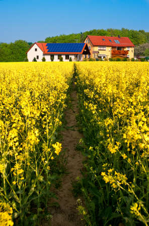 Path in a rapeseed field towards modern farm with solar panel on the roof photo