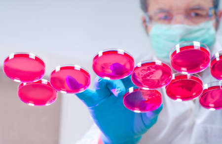animal cell: Cient�fico en el equipo de protecci�n se encarga de varios platos con cultivos de c�lulas en el medio de cultivo de color rojo