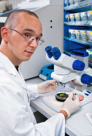 zebrafish: Young scientist dissects samples under binocular in modern laboratory Stock Photo
