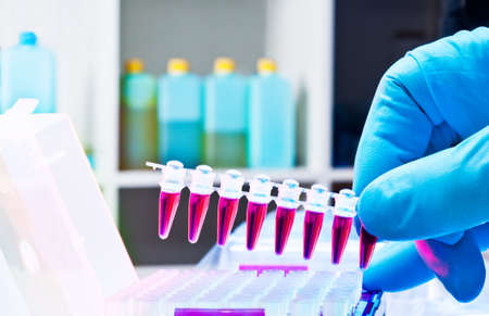 nitril: Plastic tubes for DNA amolification by PCR Stock Photo