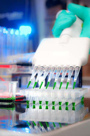 Scientist in latex gloves loads samples into PCR plate with multichannel pipette