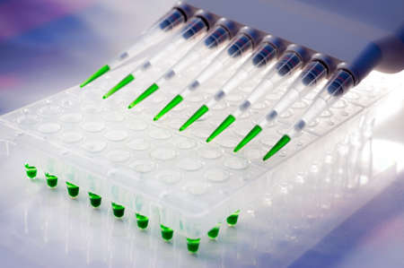 96 well plate and multichannel pipette, tools for high throuput DNA analysis by PCR Stock Photo - 14648795