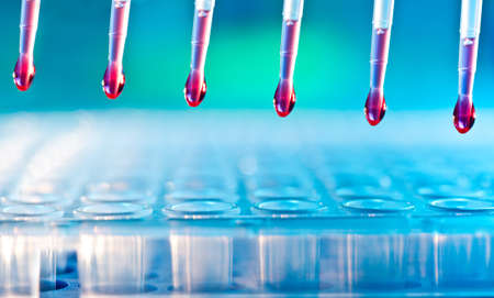 DNA analysis  loading reaction mixture into 96-well plate with multichannel pipette Stock Photo - 14716671