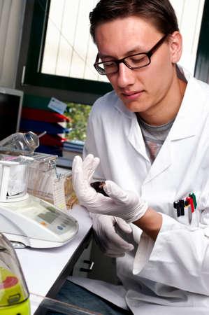 balanza de laboratorio: Joven científico con negro ratón transgénico, se centran en el guante y animales