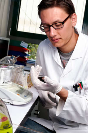 Young scientist with black transgenic mouse, focus on the glove and animal photo