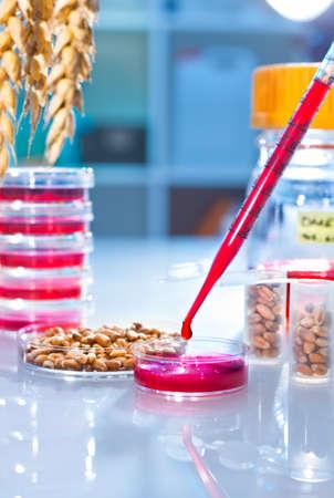 genetically modified: Cella test per testare la cultura grano geneticamente modificato