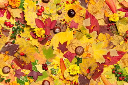 Autumn leaves, berries and flowers; seamless background Stock Photo - 15531825
