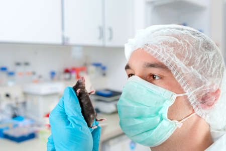 the experimental: Scientist in protective wear holds experimental mouse