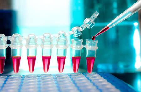 amplification: Gros plan sur les tubes en plastique pour l'amplification de l'ADN et la pipette de chargement