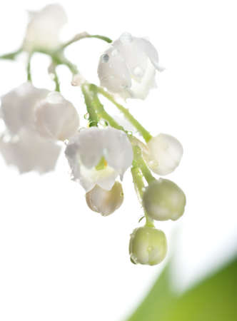 Closeup on Lily of the valley on white background Stock Photo - 17196951