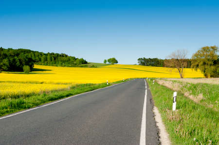 rappi: Countryside road with rapeseed field alongside under blue sky