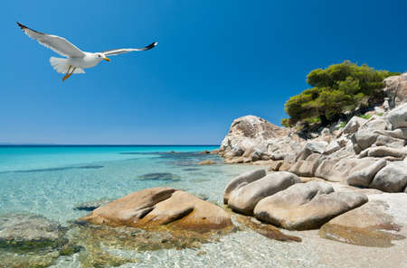 sithonia: Seagulls over shallow water by the shore in Sithonia, Northern Greece