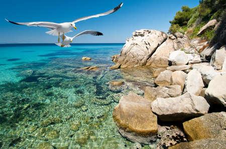 sithonia: Gabbiani sopra acqua sulla riva in Sithonia, Grecia del Nord