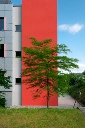 architectural feature: Tree in front of a feature wall on the corner of a modern building Stock Photo