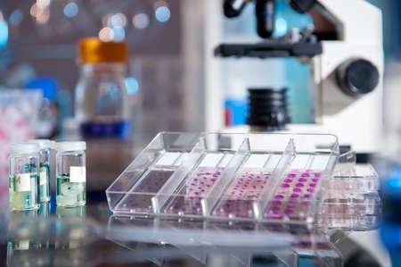 biopsia: Bandeja de pl�stico de muestras de tejidos histol�gicos lado de un microscopio