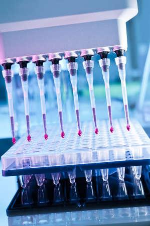 pipeta: Primer en multipipeta consejos automáticos sobre placa de 96 pocillos para la amplificación de ADN Foto de archivo