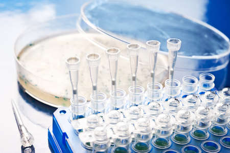 Bacterial colony picking for DNA cloning  Stock Photo - 18816539