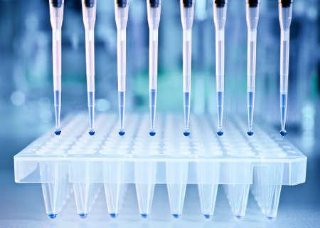 Próbki DNA są ładowane do 96-studzienkowej płytki do analizy PCR
