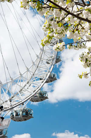 london eye: White sakura and a closeup on London Eye, copy space