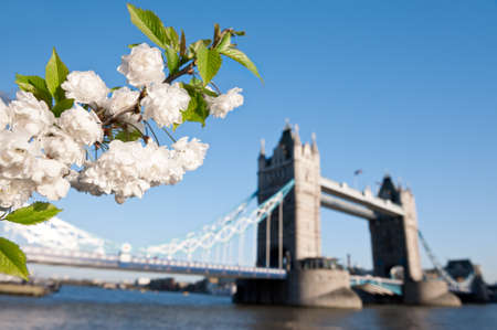 dof: Cherry blossoms with Tower bridge in the backdrop, shallow DOF