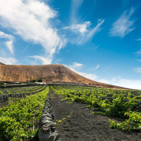 lanzarote: Lanzarote, La Geria, wijngaard op zwart vulkanisch zand Stockfoto