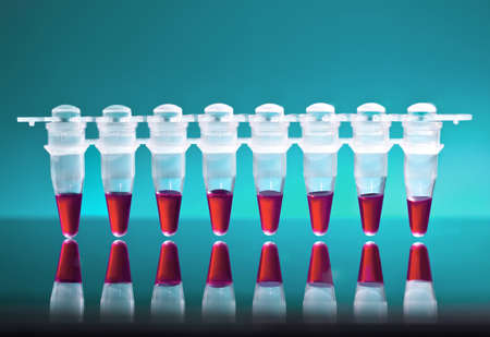 amplification: Samples for DNA amplification by PCR Stock Photo