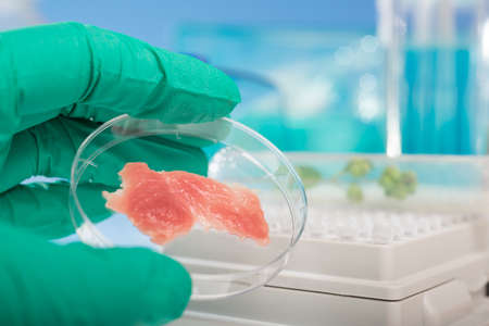 Meat cultured in laboratory conditions from stem cells photo