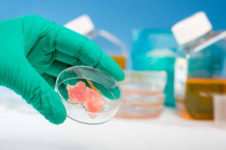 human meat: Meat cultured in laboratory conditions Stock Photo