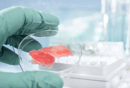 grown up: Meat grown up in laboratory conditions in a plastic dish Stock Photo