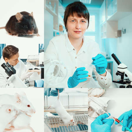 laboratory animal: Experimental work with mice in laboratory environment, collage