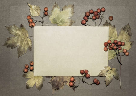 Autumn leaves and rowan berries on textured paper background, space photo