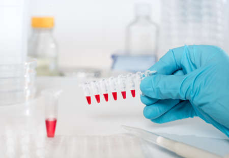 pcr: Samples to amplify DNA using PCR in gloved hand Stock Photo