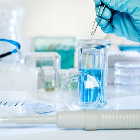biopsia: Tinci�n histoqu�mica de muestras de tejido pipeta autom�tica, tinte y gafas de diapositivas en una jarra Coplin Foto de archivo