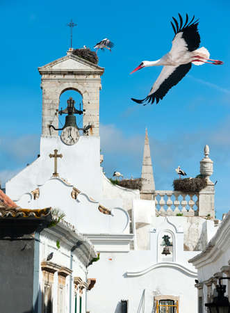 White storks on a local church in Faro, Portugal photo