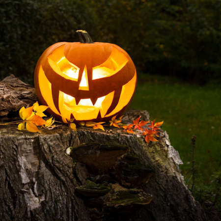 Halloween pumpkin on a tree trunk outdoors Stock Photo