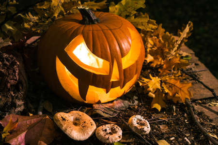 jack o lantern: Halloween pumpkin outdoors with oak leaves and mushrooms