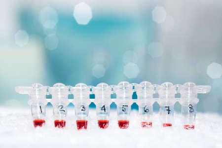 amplification: Tubes pour l'amplification d'ADN par PCR sur la glace Banque d'images