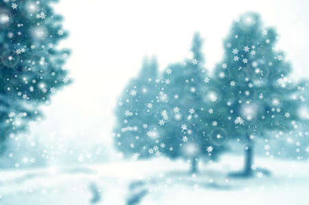 evergreen forest: Snowfall in evergreen forest, winter  Stock Photo