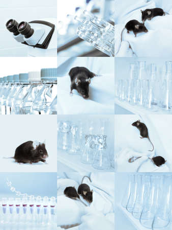 Black experimental mice, microscope and laboratory glassware, set of sqiare tinted images photo