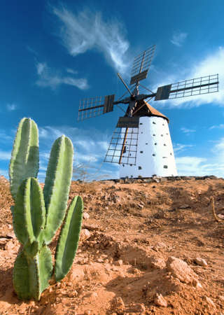 Cactus and traditional windmill on Fuerteventura, Canary islands, Spain photo