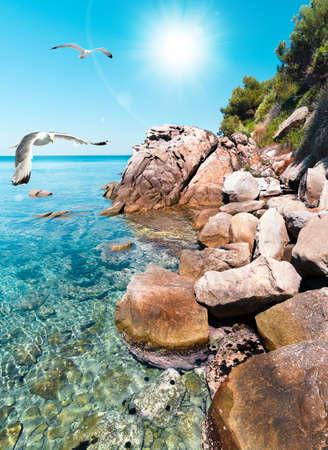 sithonia: I gabbiani volano sopra l'acqua poco profonda Sithonia, Halkidiki, in Grecia Archivio Fotografico