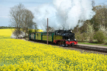 Historical steam train on island Ruegen going through rapeseed fields Editorial
