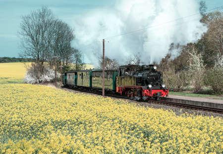 rape plant: Historical steam train on island Ruegen going through rapeseed fields Editorial