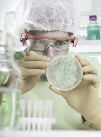 Microbiologist in protective gear picks up bacterial colonies