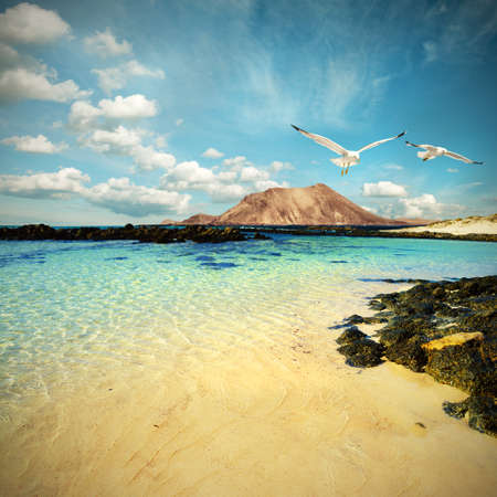 Wild seashore in Fuerteventura, Canary islands, Spain  Toned image photo