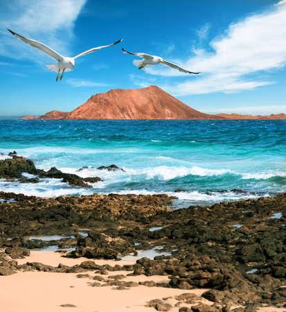 wild canary: Wild seashore in Fuerteventura, Canary islands, Spain Stock Photo
