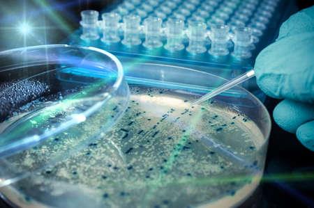 細菌のコロニー、科学実験とシャーレ 写真素材