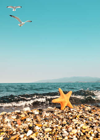 Pebble Beach: Sea star by the sea and seagulls, space for your text Stock Photo