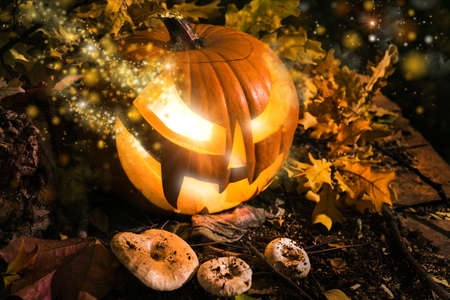 gardian: Halloween pumpkin outdoors with oak leaves and mushrooms